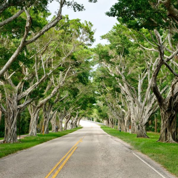 Can a Florida Historic Property Designation Extend to a Tree