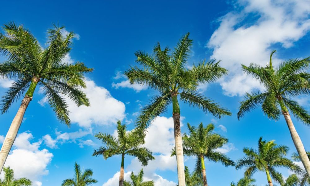 Is Palm Beach Gardens Becoming a New Corporate HQ Destination